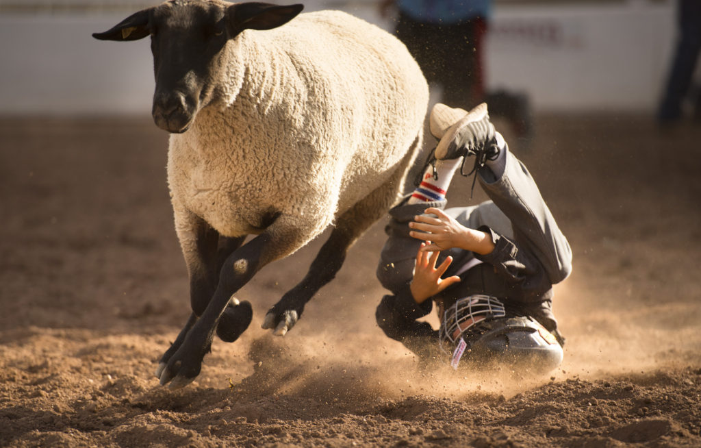 Nine-year-old Ty Peterson takes a tumble during Mutton Bustin' at the fourth COS Rodeo of the summer Wednesday, July 6, 2016 at the Norris-Penrose Event Center. The event resumes for four consecutive Wednesday nights at 5pm beginning July 27th. Tickets art $34 and include dinner, rodeo and a concert. Visitors,like Ty,  can even participate in certain selected events. Photo by Mark Reis, The Gazette