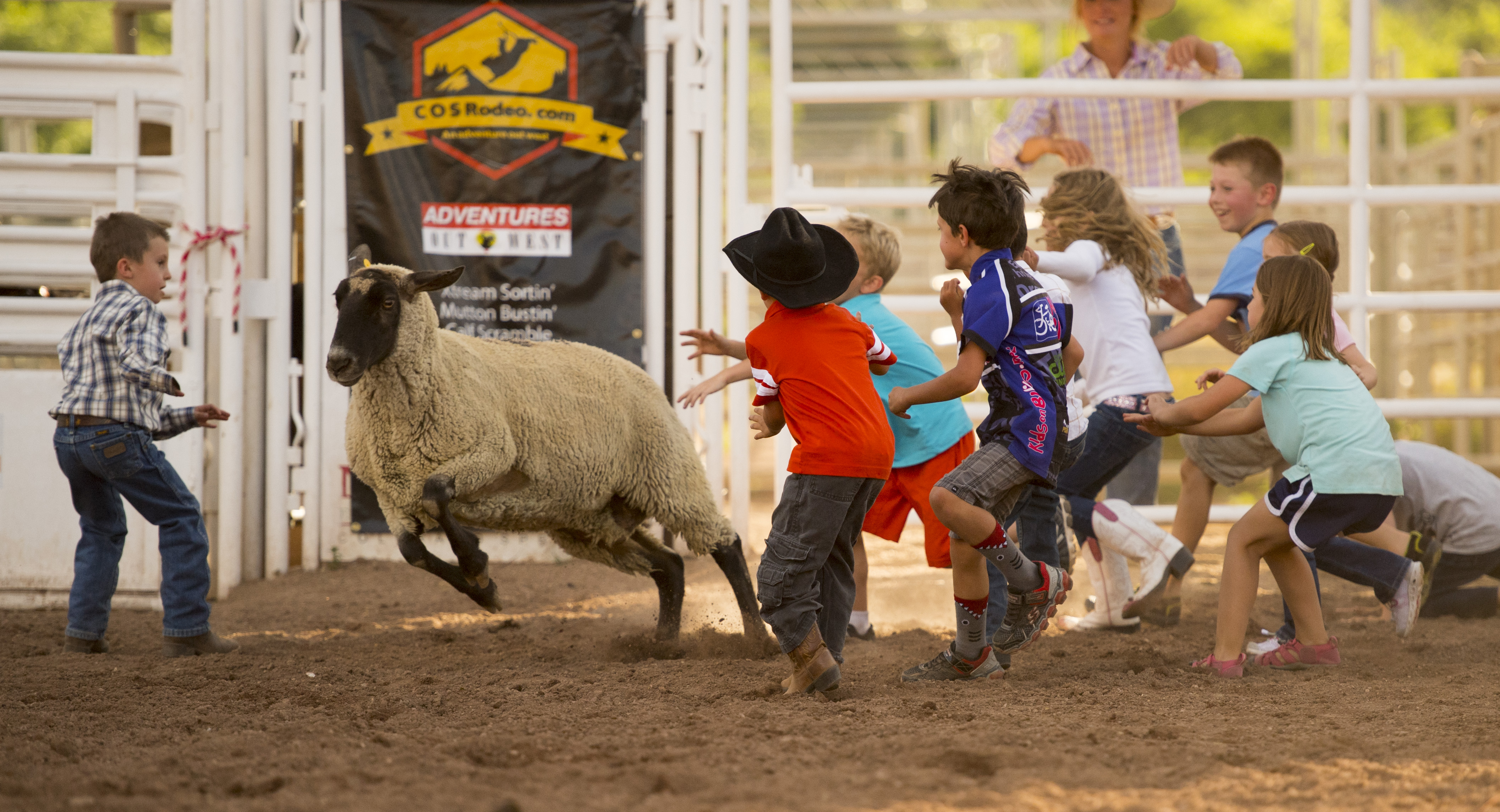 "Kids chase a loose sheep during a ""Mutton Scramble"" at the fourth COS Rodeo of the summer Wednesday, July 6, 2016 at the Norris-Penrose Event Center. The event resumes for four consecutive Wednesday nights at 5pm beginning July 27th. Tickets art $34 and include dinner, rodeo and a concert. Visitors can even participate in certain selected events. Photo by Mark Reis, The Gazette"