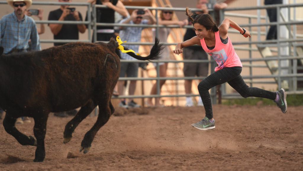 Layla Qader, 12, chases a calf during the Calf Scramble at the fourth COS Rodeo of the summer Wednesday, July 6, 2016 at the Norris-Penrose Event Center. The event resumes for four consecutive Wednesday nights at 5pm beginning July 27th. Tickets art $34 and include dinner, rodeo and a concert. Visitors can even participate in certain selected events. Photo by Mark Reis, The Gazette
